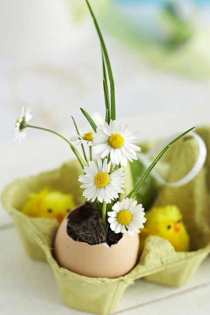 floricele masa Paste