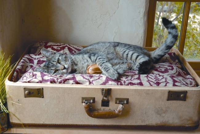 valiza veche pat pisica