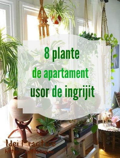 8 plante de apartament