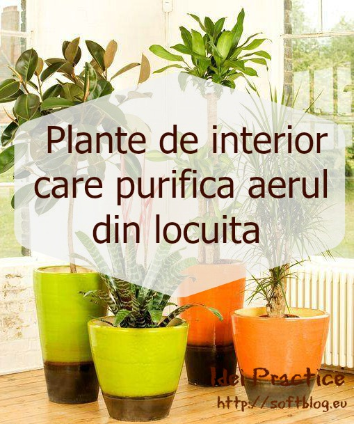 plante de interior care purifica aerul