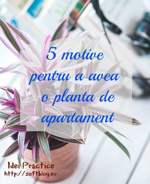 5 motive