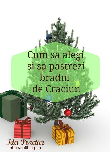 bradul de Craciun