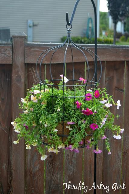 colivie flori