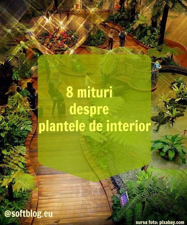 plantele de interior