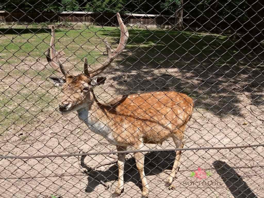 grădina zoologică Târgu Neamț