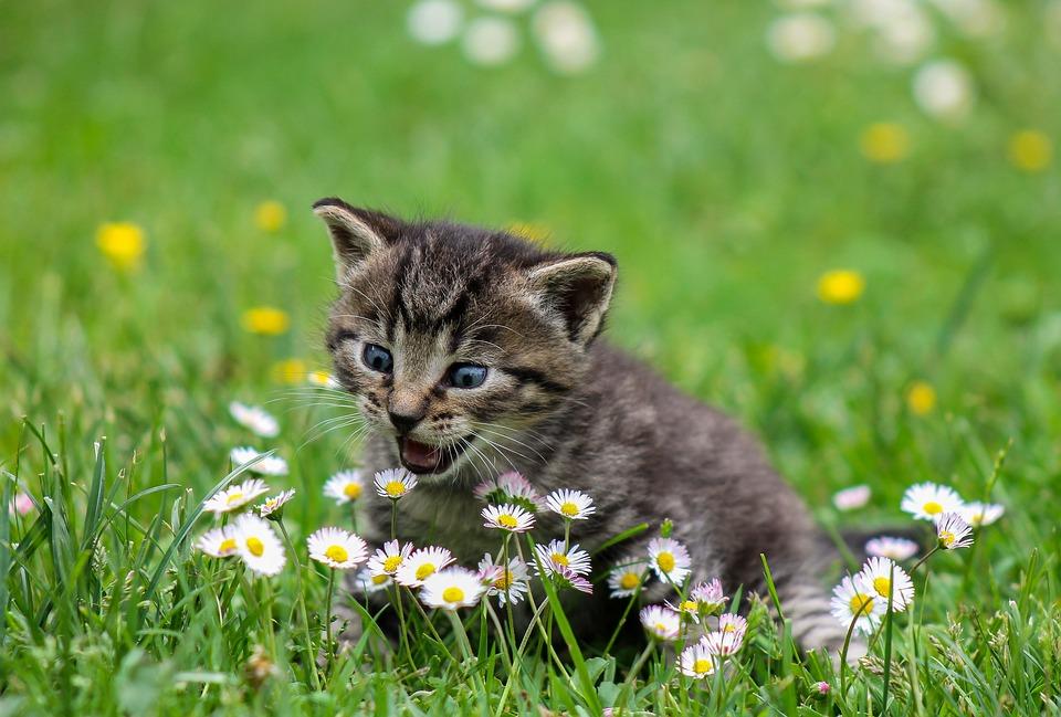 lucruri despre pisici